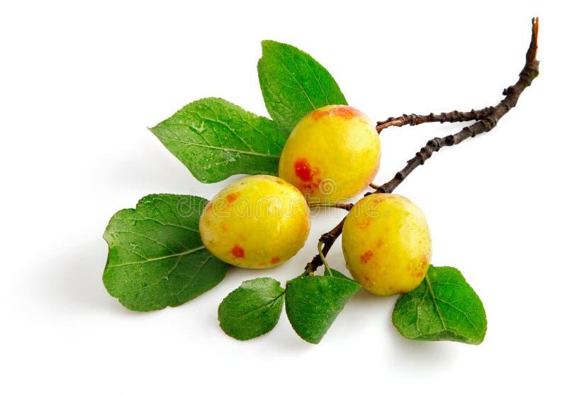 Frutas frescas da ameixa com folhas verdes fotos de stock royalty free