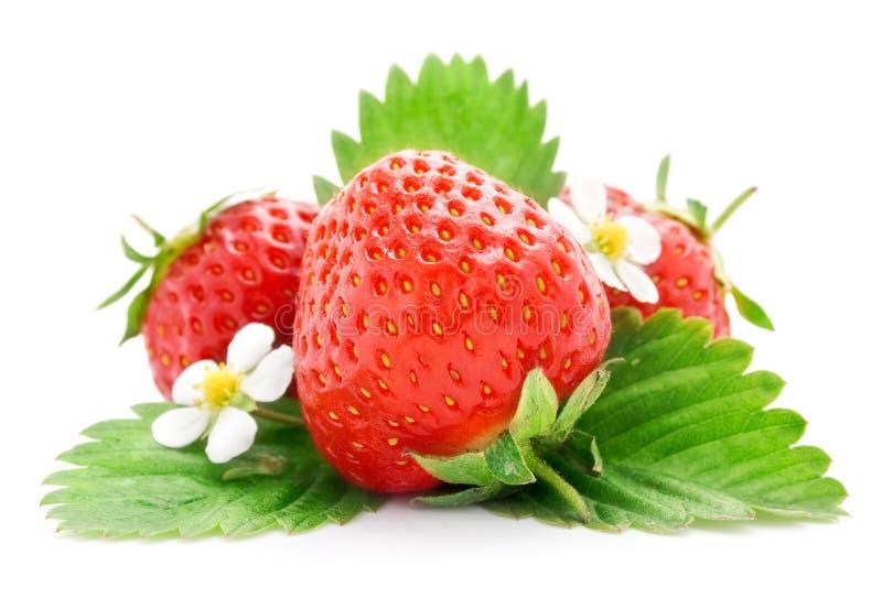 Frutas frescas da morango com flores e folhas imagens de stock
