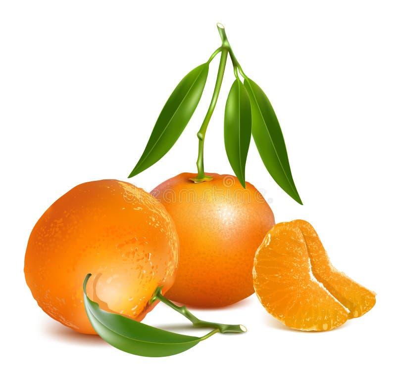 Frutas frescas de la mandarina con las hojas verdes libre illustration
