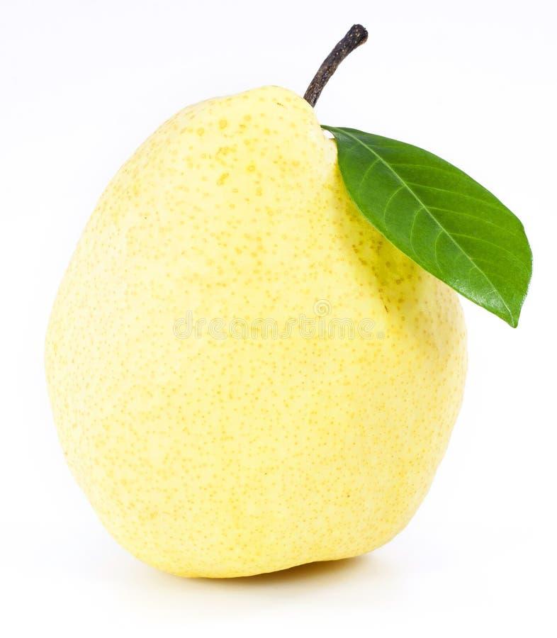 Frutas frescas de la pera fotografía de archivo libre de regalías