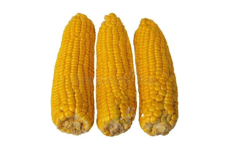 Frutas frescas maduras del maíz aisladas en el fondo blanco Para sus FO imágenes de archivo libres de regalías