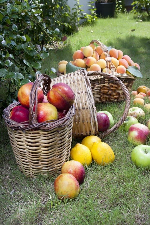 Frutas frescas nas cestas fotos de stock