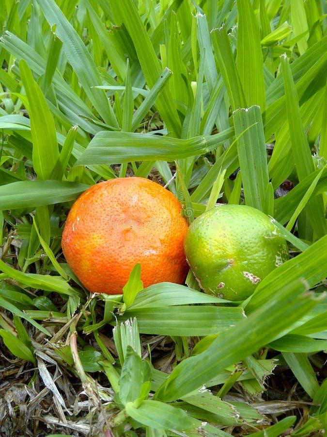 Frutas maduras, verdes y anaranjadas en la hierba fotos de archivo libres de regalías