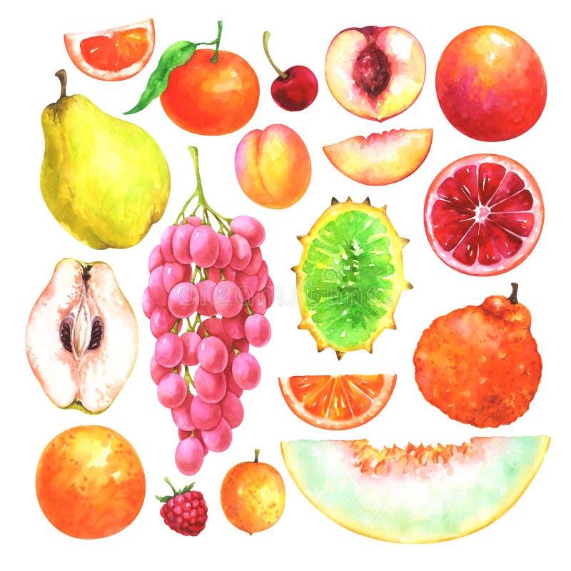 Frutas pintadas a mano de la acuarela fijadas libre illustration