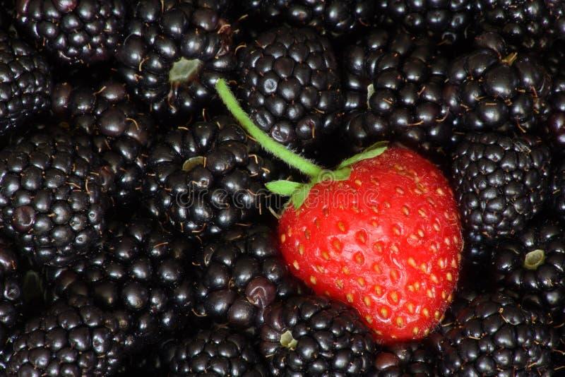 Frutas rojas y negras fotos de archivo