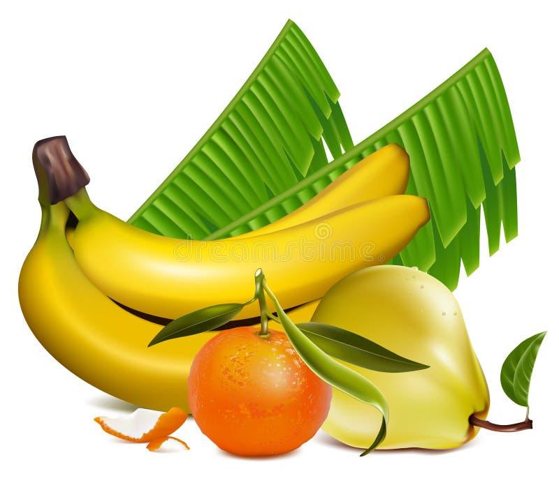 Download Frutas tropicais frescas ilustração do vetor. Ilustração de verde - 12800708