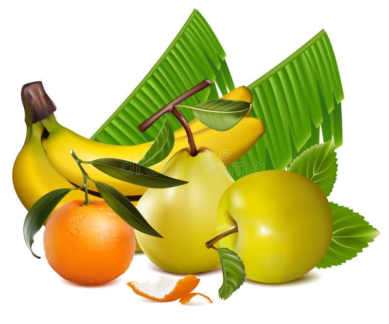 Frutas tropicales stock de ilustración