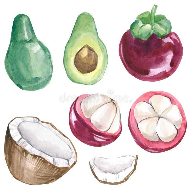 Frutas tropicales exóticas de la colección de verano de la acuarela Coctails exóticos pintados a mano en el fondo blanco stock de ilustración