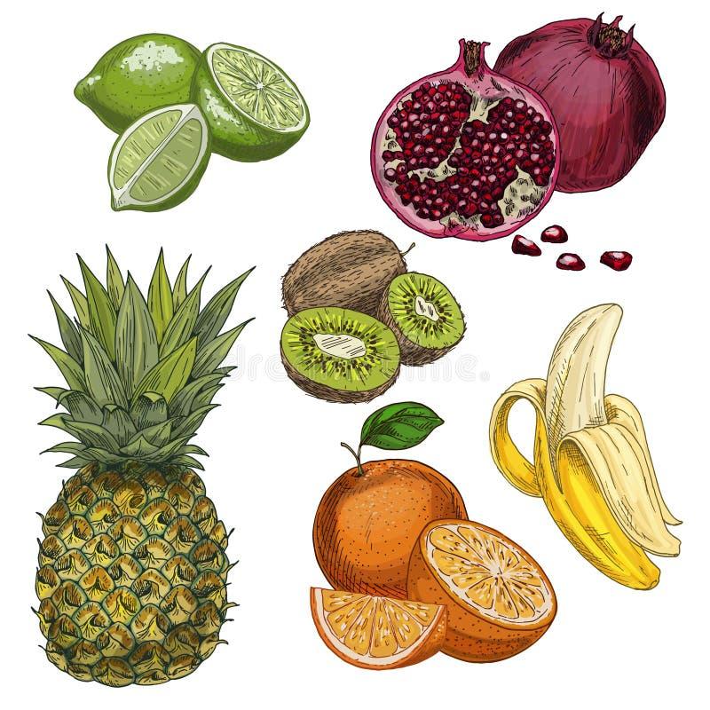 Frutas tropicales Piña, cal, granada, kiwi, plátano, anaranjado libre illustration