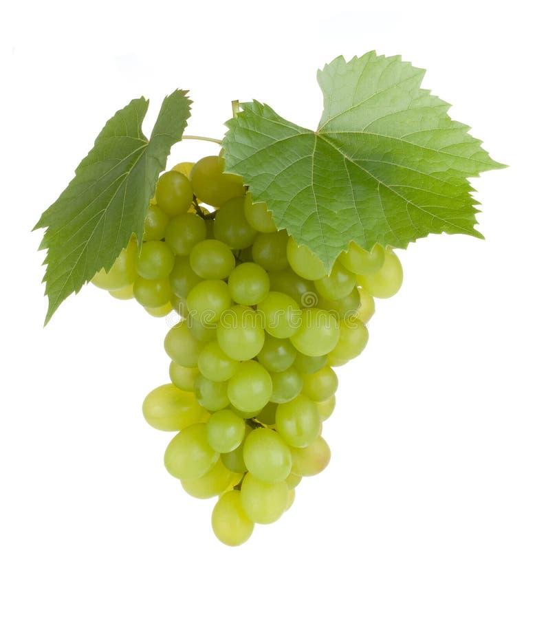 Frutas verdes de la uva con las hojas