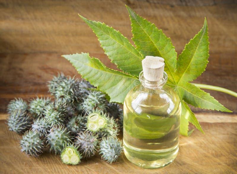 Frutas y aceite de ricino - Ricinus communis imagen de archivo libre de regalías