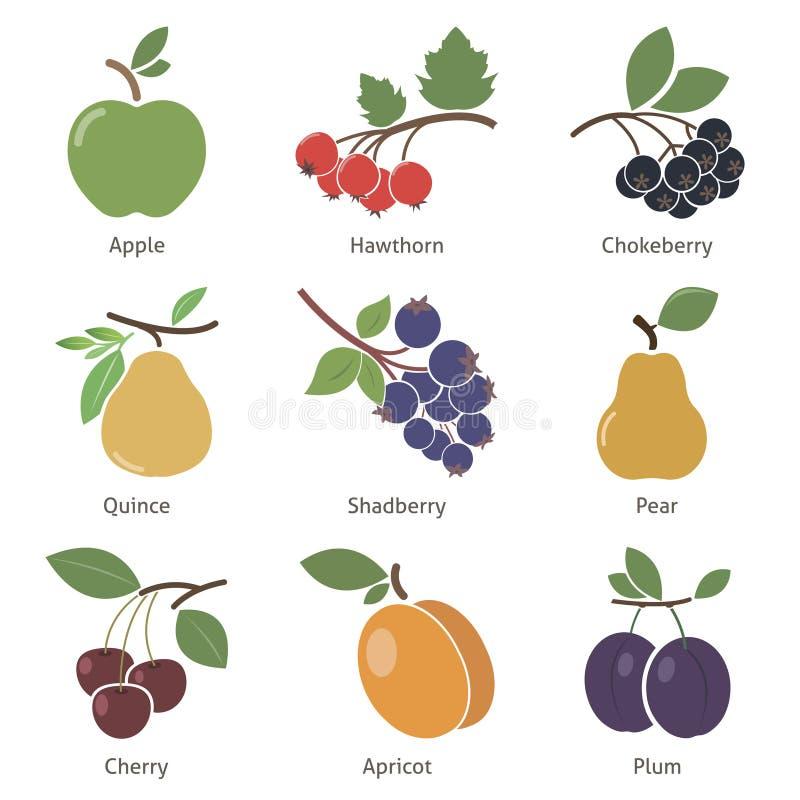 Download Frutas y bayas ilustración del vector. Ilustración de sano - 44851550