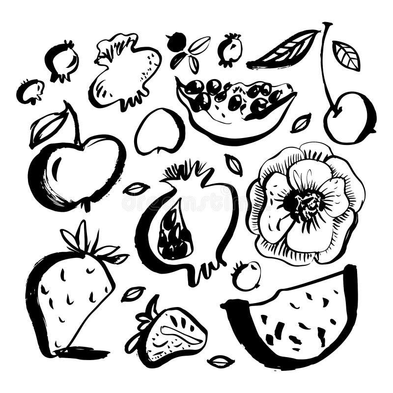 Frutas y bayas Garabatos pintados cepillo Elementos drenados mano del diseño Ilustración del vector ilustración del vector