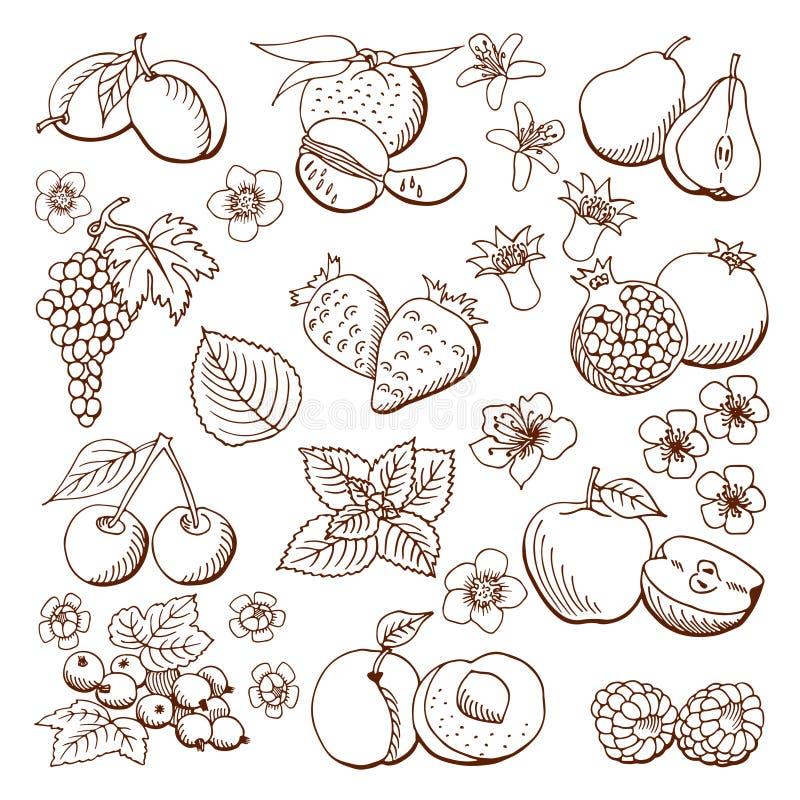 Frutas y bayas Ilustración del vector Elementos del diseño stock de ilustración