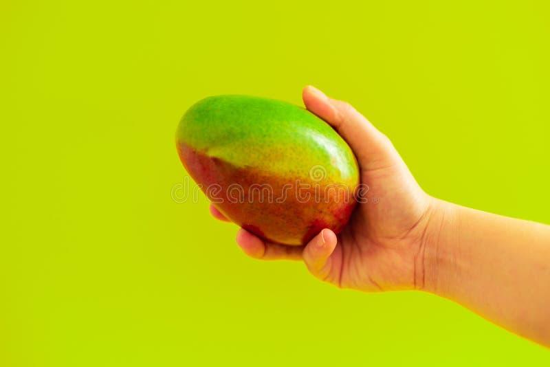Fruto da manga da terra arrendada da m?o no fundo verde imagens de stock