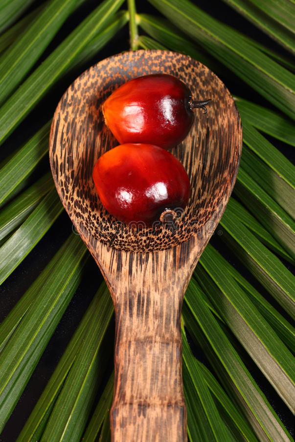 Fruto da palma de óleo imagem de stock