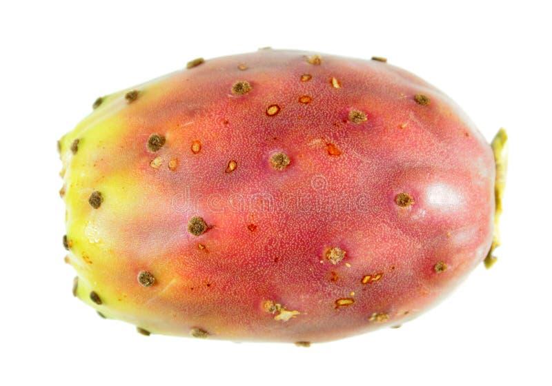 Fruto da pera espinhosa isolado no fundo branco imagens de stock royalty free
