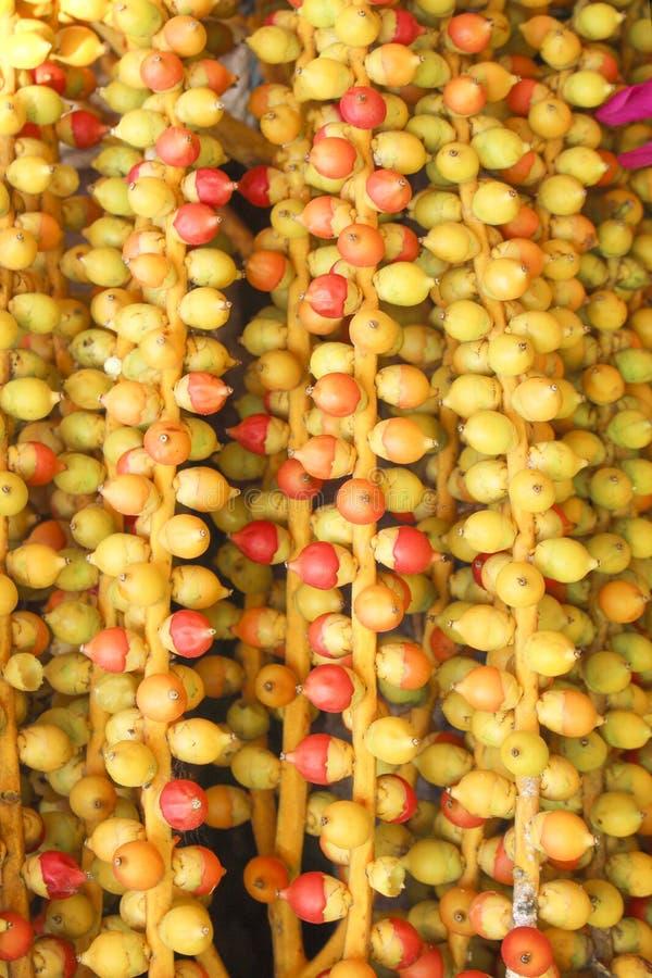 Fruto da textura da palmeira, do vermelho colorido e do fundo amarelo dos testes padrões da natureza foto de stock royalty free