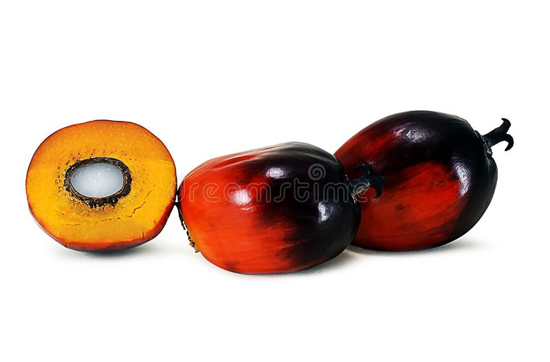 Fruto de óleo da palma isolado no branco fotos de stock
