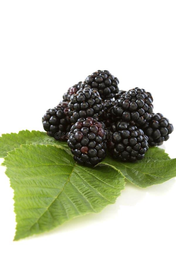 Fruto de Blackberry com folhas foto de stock royalty free