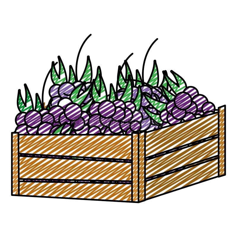 Fruto delicioso das uvas da garatuja dentro da cesta de madeira ilustração do vetor