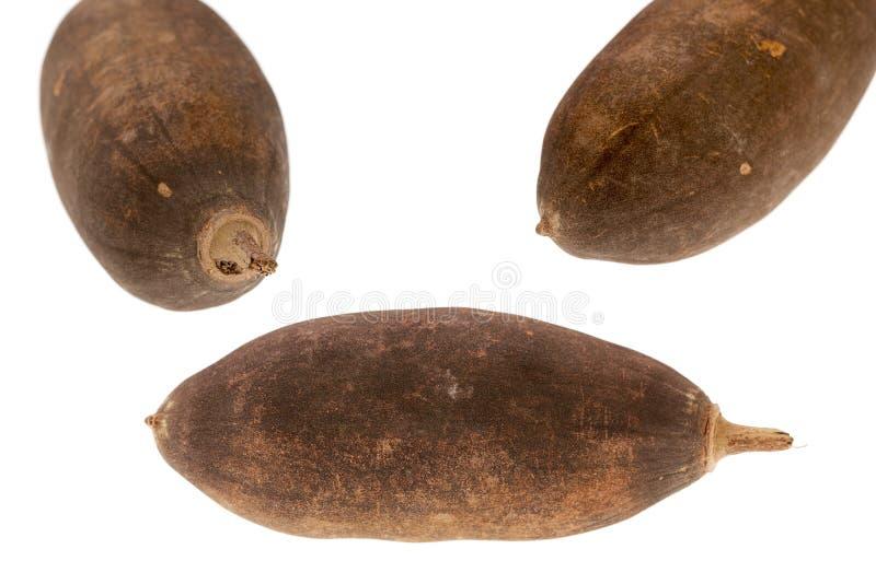 Fruto do Baobab imagens de stock