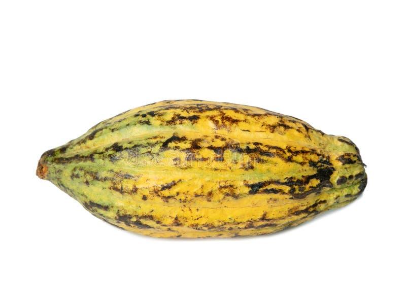 Fruto do cacau, feij?es crus do cacau, vagem do cacau no fundo branco imagem de stock royalty free