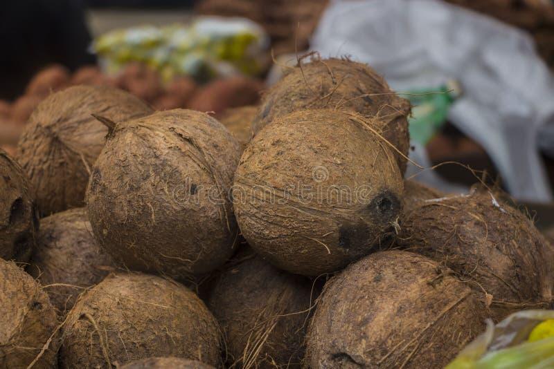 Fruto do coco de Brown fotografia de stock