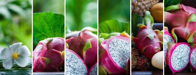 Fruto do dragão em condições naturais em um backg tropical bonito imagem de stock