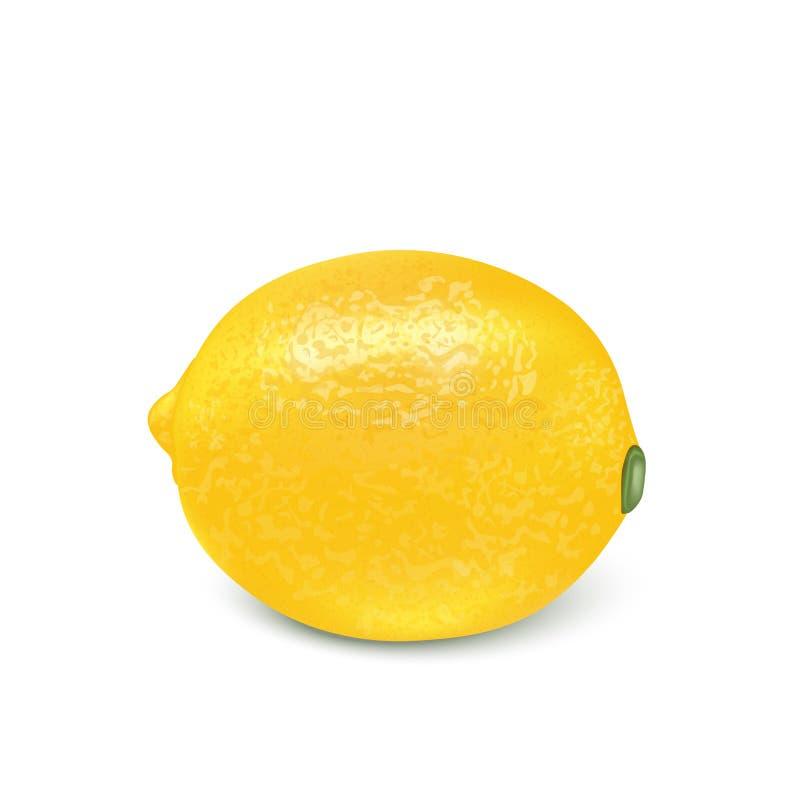 Fruto do limão para o suco fresco iso maduro amarelo realístico do limão 3d ilustração do vetor