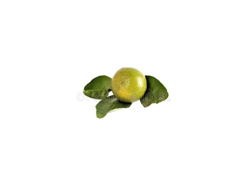 Fruto do lim?o no fundo branco Citrino com fruto verde fotos de stock royalty free