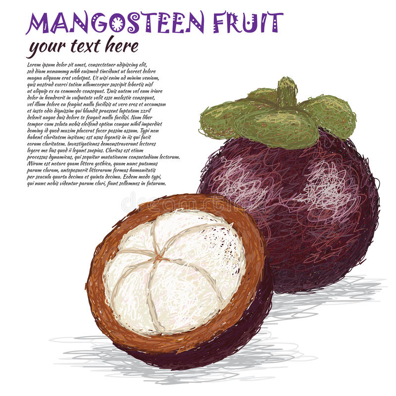 Fruto do mangustão ilustração royalty free