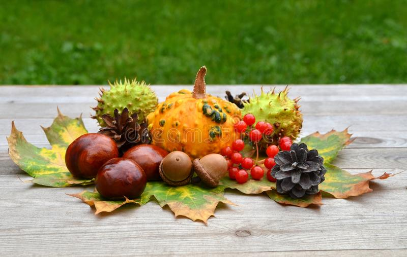Fruto do outono fotos de stock