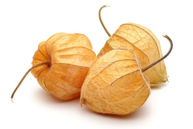 Fruto do Physalis ou baga dourada fotografia de stock royalty free