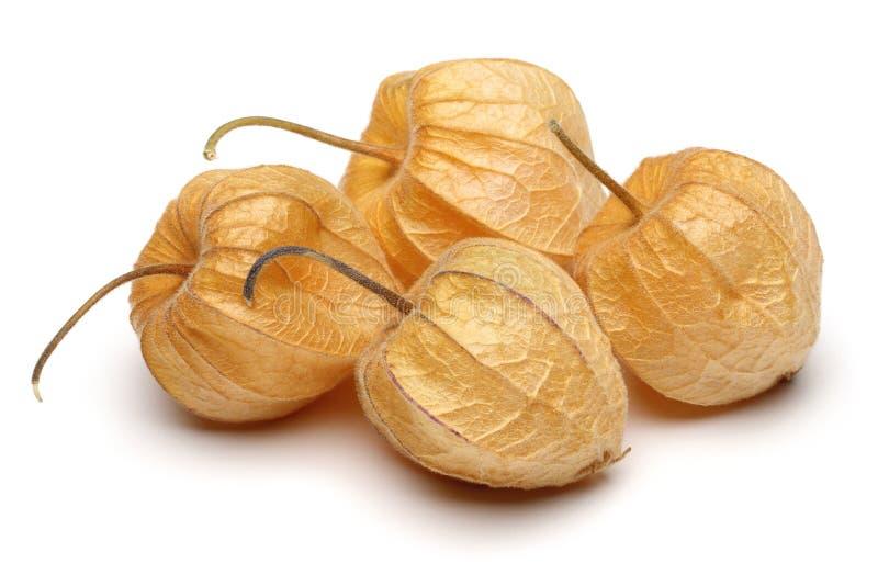 Fruto do Physalis ou baga dourada foto de stock
