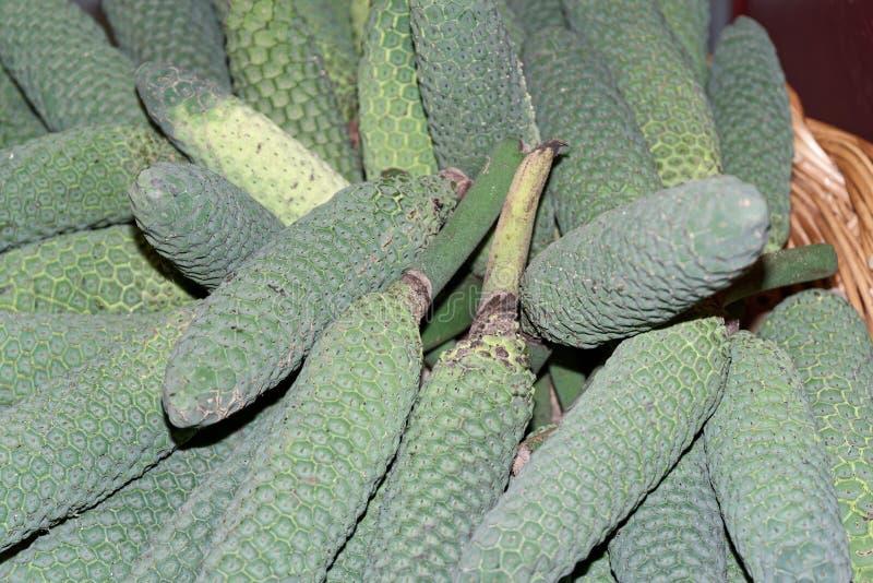 Fruto exótico do deliciosa de Monstera Frutos tropicais conhecidos como a árvore da planta da salada de fruto fotos de stock royalty free