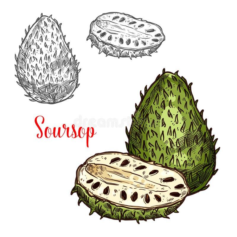 Fruto exótico do esboço do vetor do Soursop ilustração stock