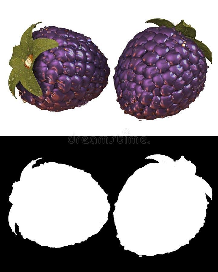 Fruto fresco da amora-preta com água e canal alfa condensados ilustração royalty free