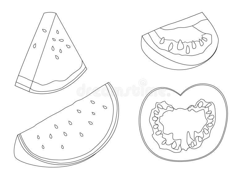 Fruto fresco da linha melancia e do tomate ilustração do vetor