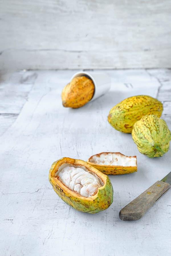 Fruto fresco do cacau foto de stock