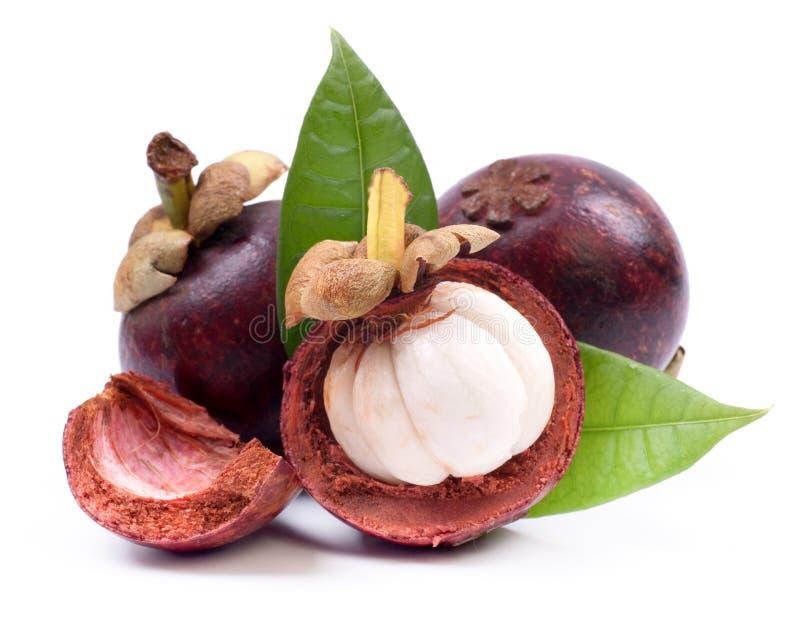 Fruto fresco do mangustão fotos de stock