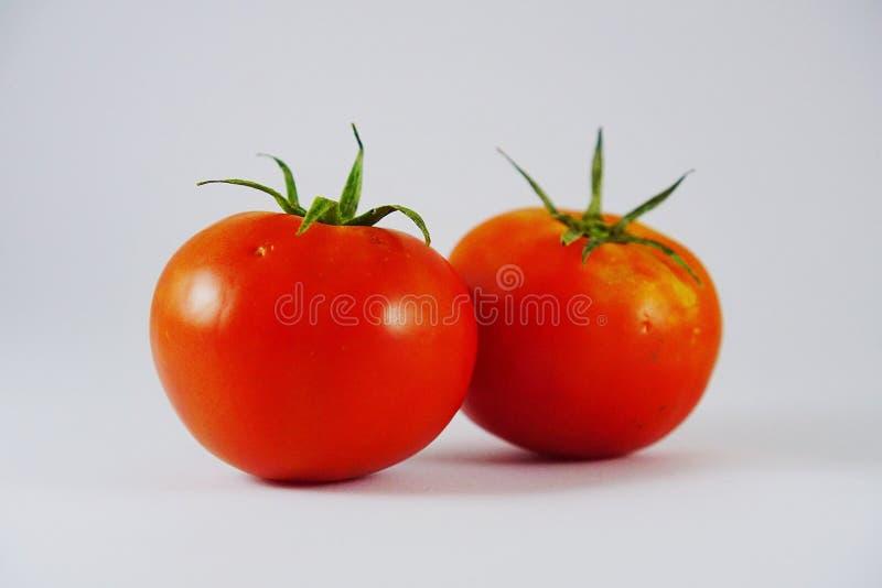 fruto fresco do tomate isolado imagem de stock