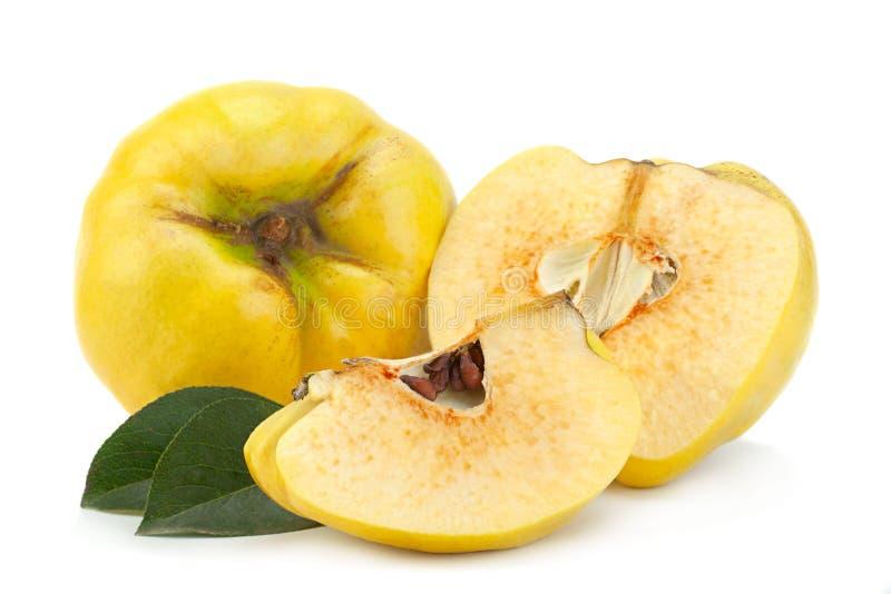 Fruto maduro do marmelo foto de stock