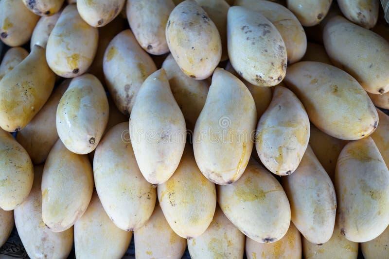Fruto maduro ou amarelo das manga fresco do jardim que mostra s natural fotografia de stock royalty free