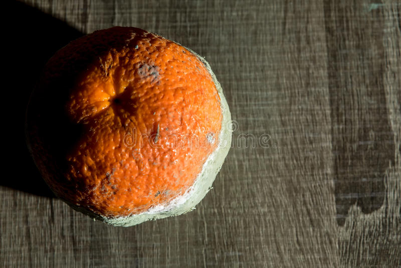 Fruto podre e fresco da tangerina com molde fotos de stock royalty free