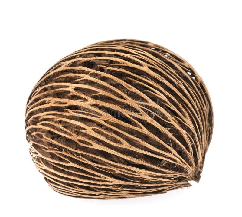 Fruto seco de Cerbera no fundo branco imagem de stock
