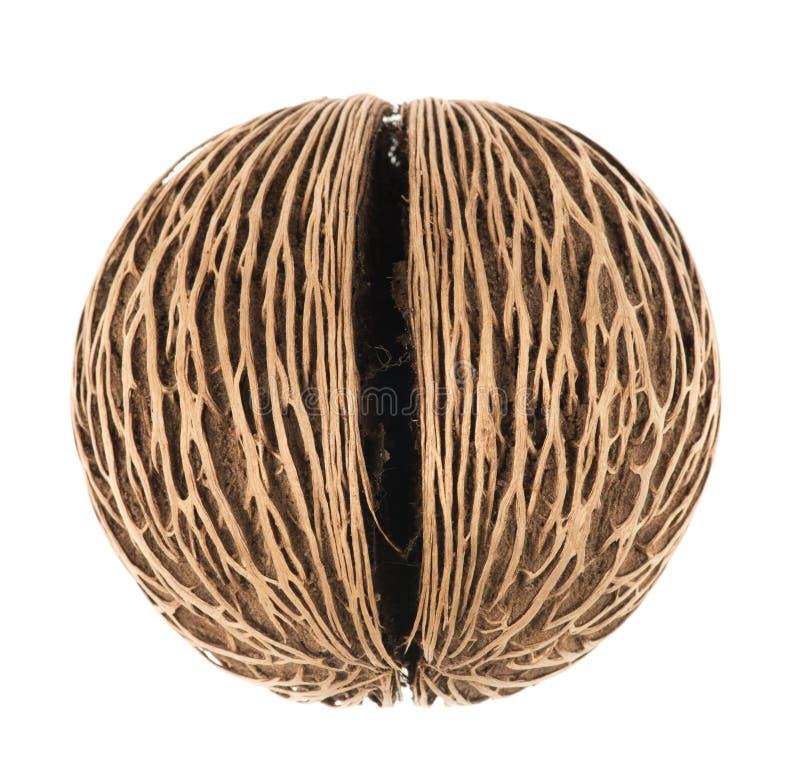 Fruto seco de Cerbera no fundo branco imagem de stock royalty free