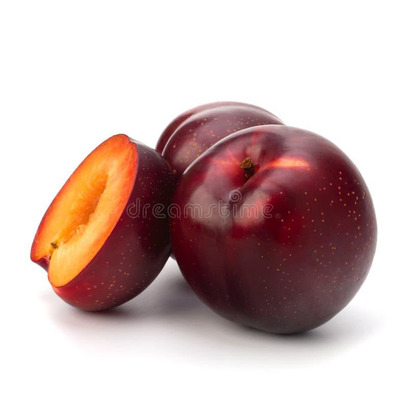 Fruto vermelho da ameixa foto de stock
