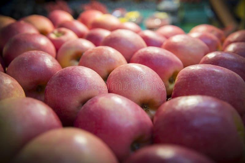 Fruto vermelho das maçãs imagens de stock