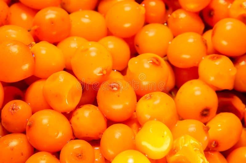 Frutos alaranjados de rhamnoides de Hippophae, mar-espinheiro cerval comum do nome fotografia de stock royalty free